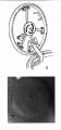 Trumpeter 1/35 КВ-1 - Беспощадный
