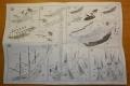 Обзор Zvezda 1/350 The Black Pearl